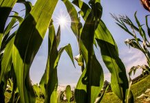 Indigo Ag's Natural Seed-Coating Innovation Assists Plants Thrive
