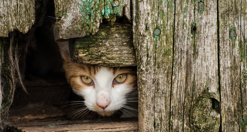 Feral felines seem pitiful at managing New york city City's rats