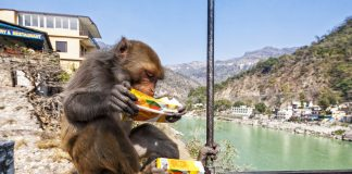 In Laboratory Turned Gambling Establishment, Gaming Monkeys Assist Researchers Discover Risk-Taking Brain Location