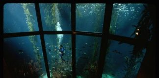 Can Organisations Take Part In (And Benefit From) Ocean Preservation?