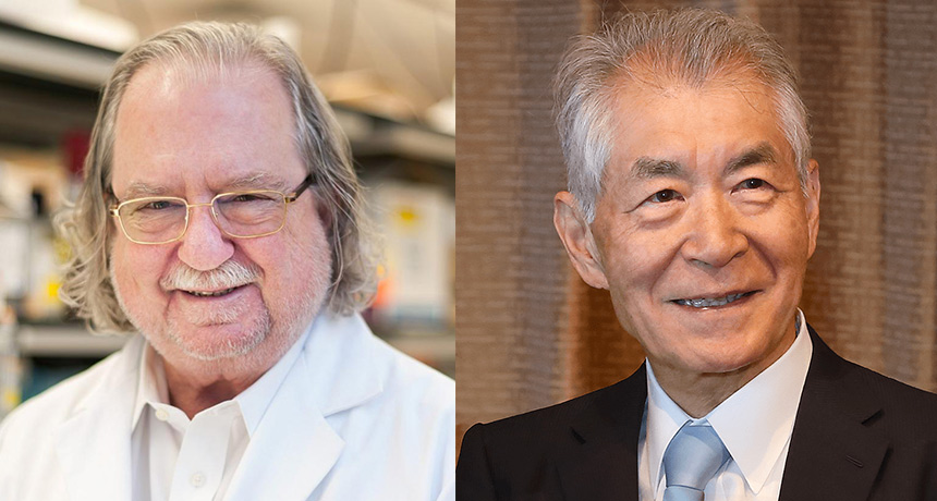Discovery of how to prod a client's body immune system to eliminate cancer wins a Nobel