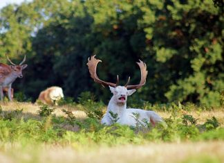 Professional Photographer Catches Rare, White Deer Mid-Sneeze (Due To The Fact That Nature Is Majestic)