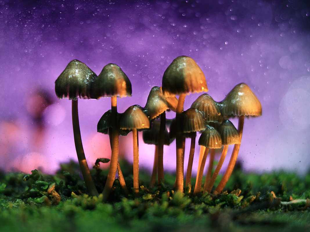 A Peter Thiel-backed start-up has actually raised $25 million to release a 'virgin market of for-profit psychedelic research study'