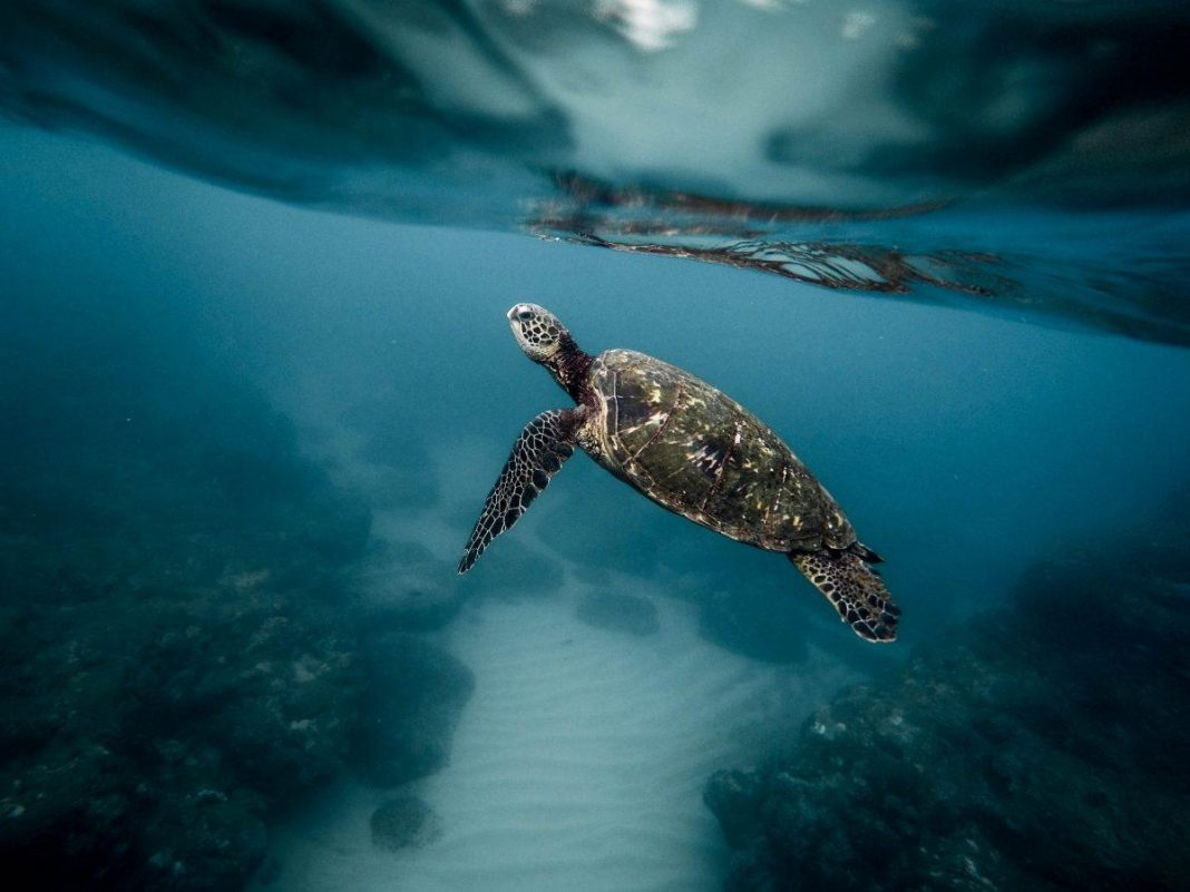 Why The UK Wants To Safeguard 30% Of The World's Oceans By 2030