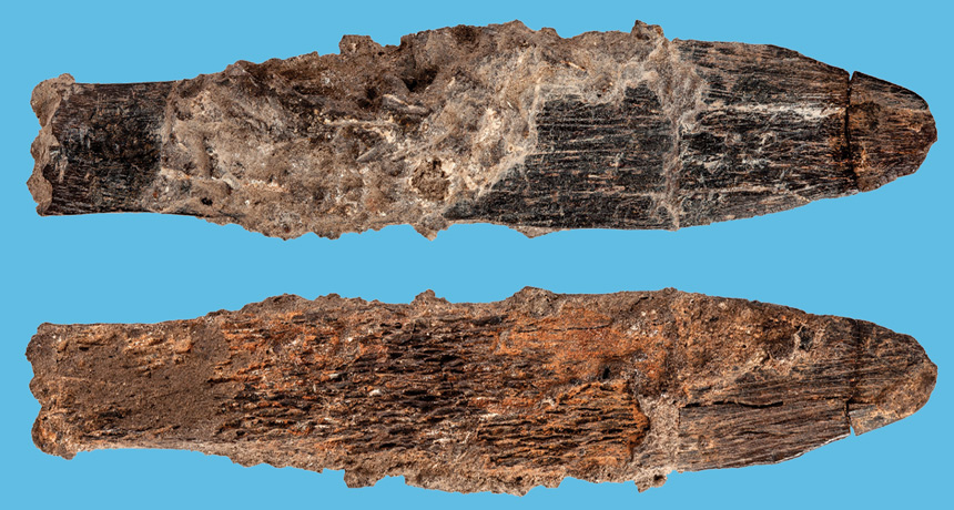 A 90,000- year-old bone knife tips unique tools appeared early in Africa