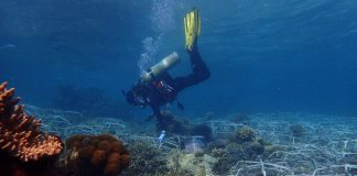 Utilizing Steel 'Spiders,' We Can Restore Big Swathes Of Coral Reefs