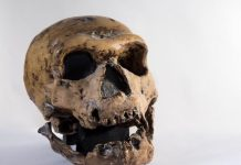 Genetic Exchange In Between Modern Human Beings And Neanderthals Consisted Of Both Poisons And Antidotes