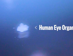 Researchers grow human eye parts to identify how we see in color