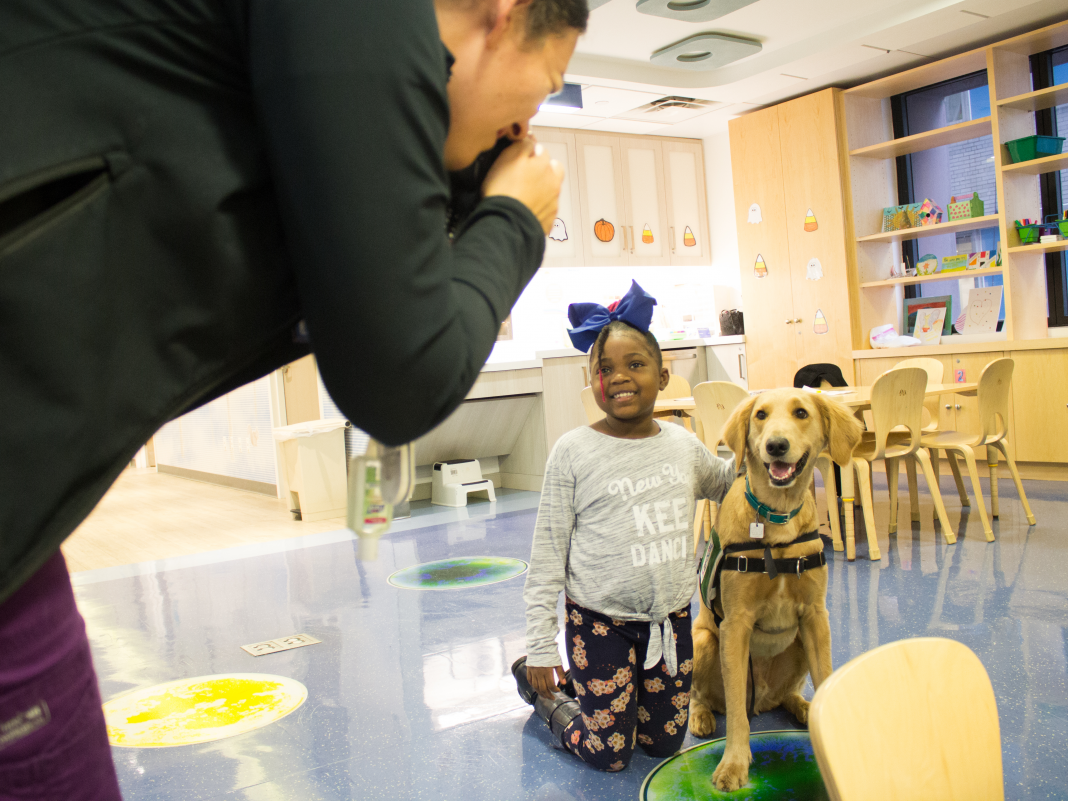A day in the life of Teacher, a 3-year-old golden doodle who's a full-time staff member at Mount Sinai's Kravis Kid's Medical facility