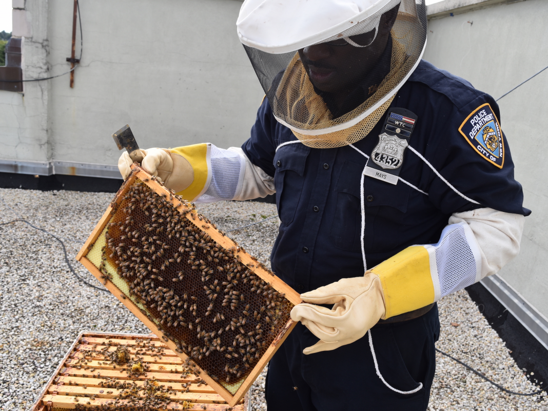 The New York City City Cops Department uses an elite bee police with his own hive atop a precinct. Have a look.