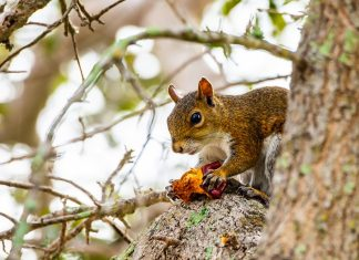 Male Passes Away from Incredibly Uncommon Illness After Consuming Squirrel Brains
