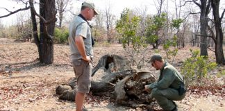 An Elephant's Carcass, and a Grim Tip of Poaching's Victims