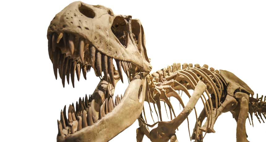 T. rex crushed bones with an extraordinary quantity of force