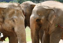 Scientist Research Study How An Elephant Does Mathematics