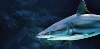 If Sharks Are So Dreadful, Why Do Not Data Program It?