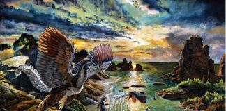 'Phantom' Archaeopteryx, Among the World's first Birds, Might Most Likely Fly