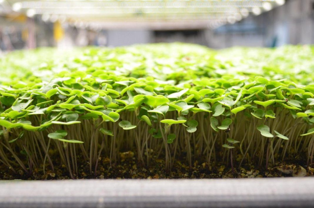 Edenworks Promotes Arise From Growing With Ecology Rather Of Chemicals