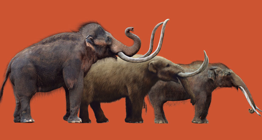 How mammoths took on other animals and lost