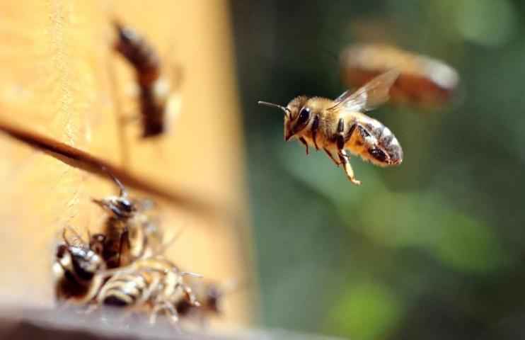 More Honey Bee Hives To Go Modern With ApisProtect