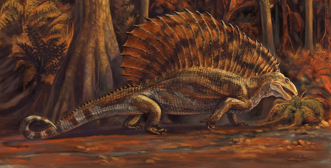 Your 'Fat-Toothed' Relative May Not Make It for Thanksgiving. He Disappeared from Earth 300 Million Years Ago.