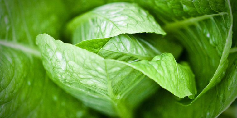 Garbage your romaine lettuce and do not consume any in dining establishments, states the CDC