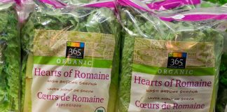 Do Not Consume Any Romaine Lettuce, CDC Alerts Of Another E. Coli Break Out