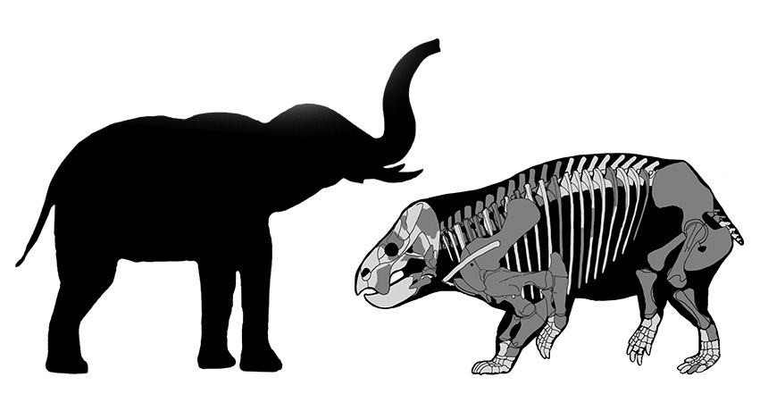 This substantial plant-eater flourished in the age of dinosaurs– however wasn't among them