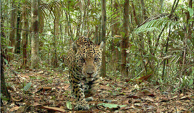 Cam traps developed for animals are now attacking human personal privacy
