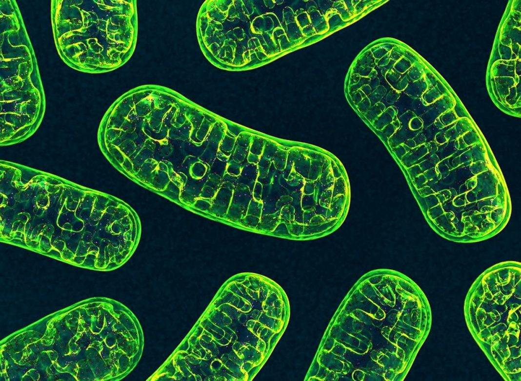 Papas (Not Simply Mommies) Can Hand Down Mitochondrial DNA, According to Intriguing New Research Study