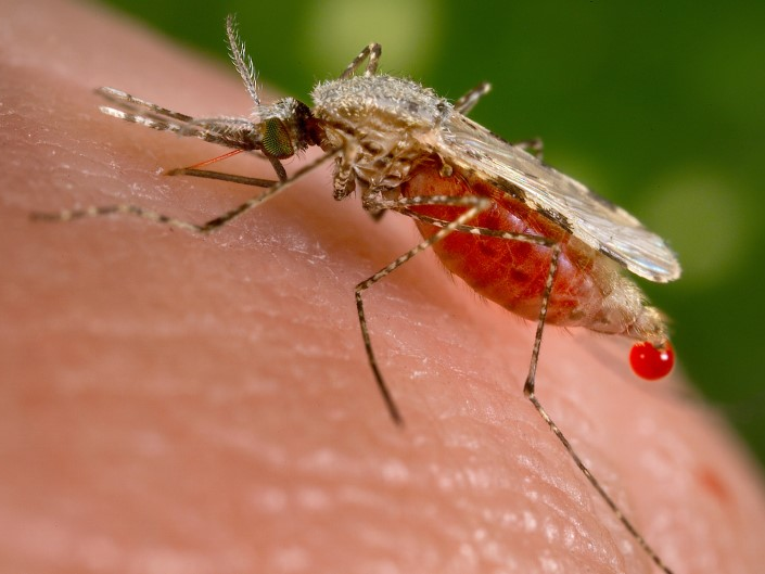 A significant environment report anticipates West Nile infection and other insect-borne illness will end up being much more typical in the United States