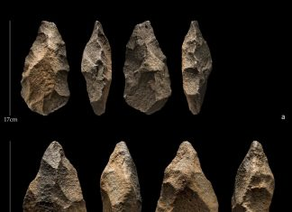 Ancient Hominins Might Have Lived Together With Modern Human Beings in Arabia