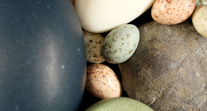 Eggs developed color and speckles just when– throughout the age of dinosaurs