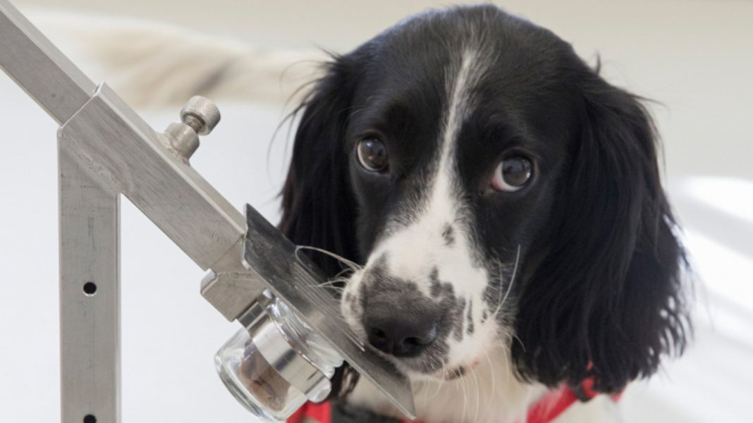 How A Pet dog Might Stop The International Spread Of Illness
