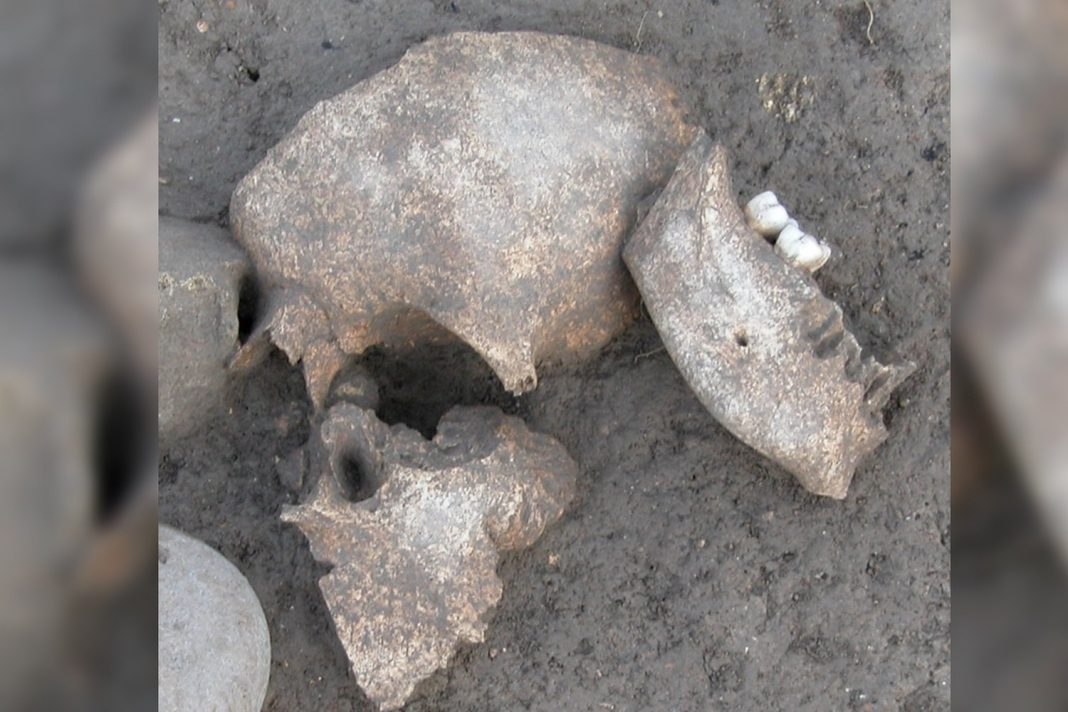 These 2,000- Year-Old Embalmed Heads Demonstrate How Ancient Celts Commemorated Success