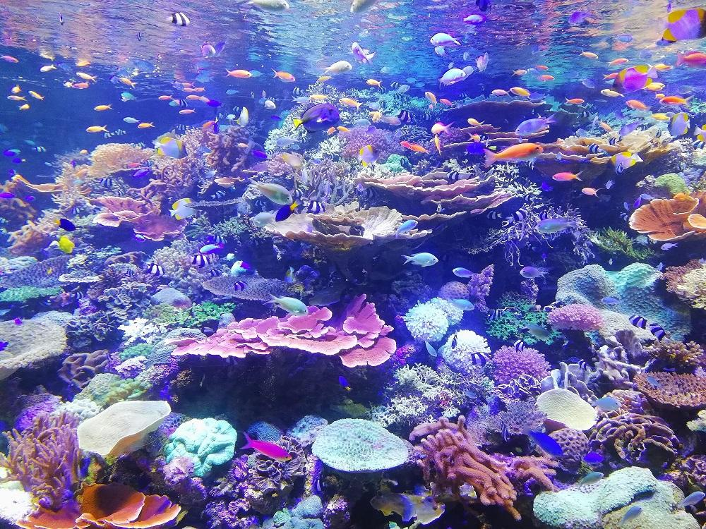 Corals Produce Particles To Bring In Microorganisms That Keep Them Healthy