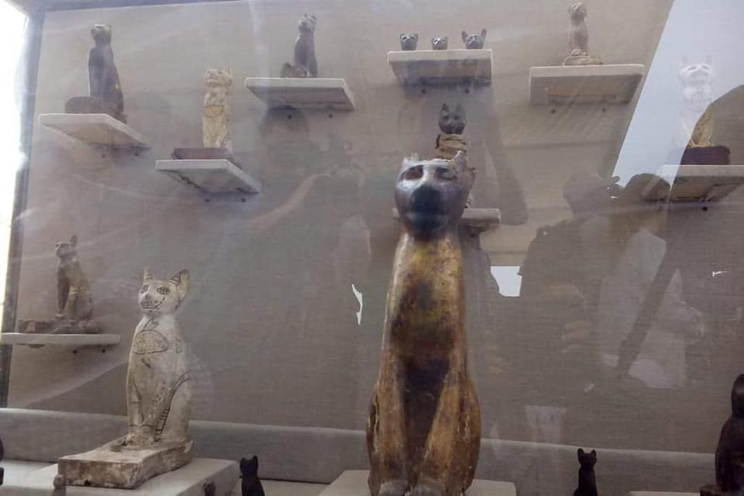 Purrfect Photos: Feline Mummies and Wooden Feline Statues Discovered at Ancient Egyptian Burial Complex