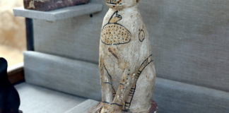 Felines, beetles, other mummified animals discovered– together with a sealed door