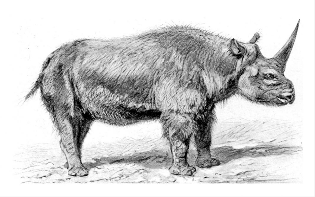 Glacial Epoch 'Unicorn' May Have Lived Along With Modern Human Beings