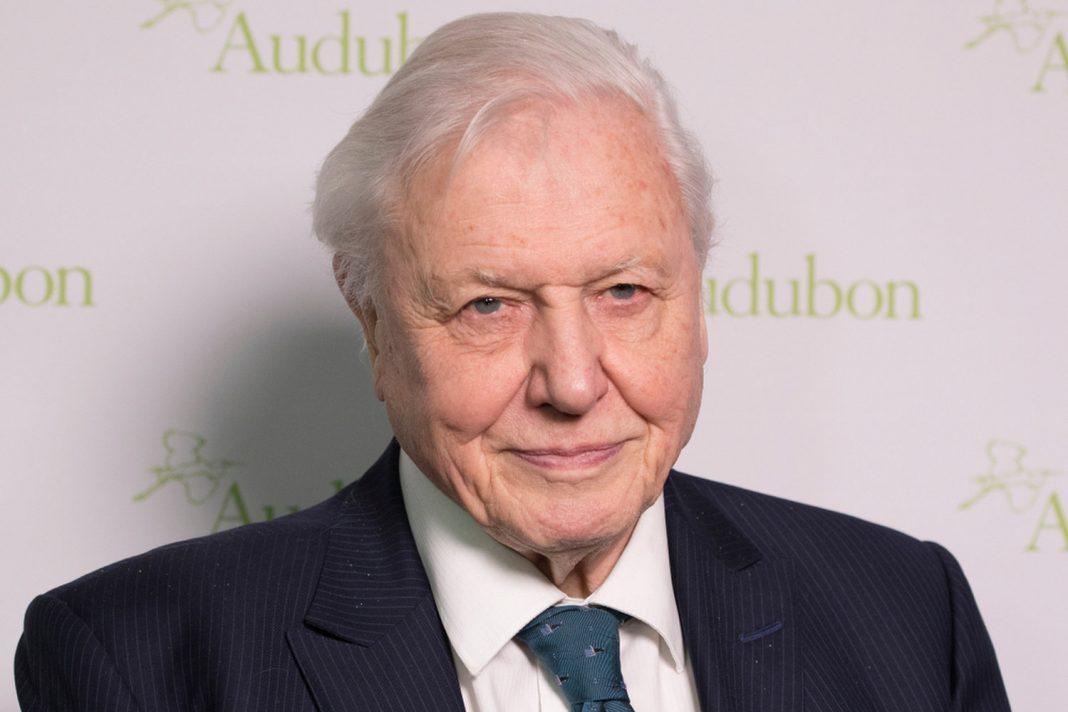 Sir David Attenborough Anticipates the 'Collapse of Civilization' at UN Environment Top