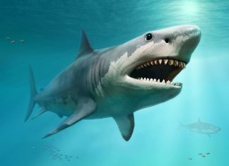 Super-Steamy Megalodon May Have Actually Been Too Hot to Prevent Termination