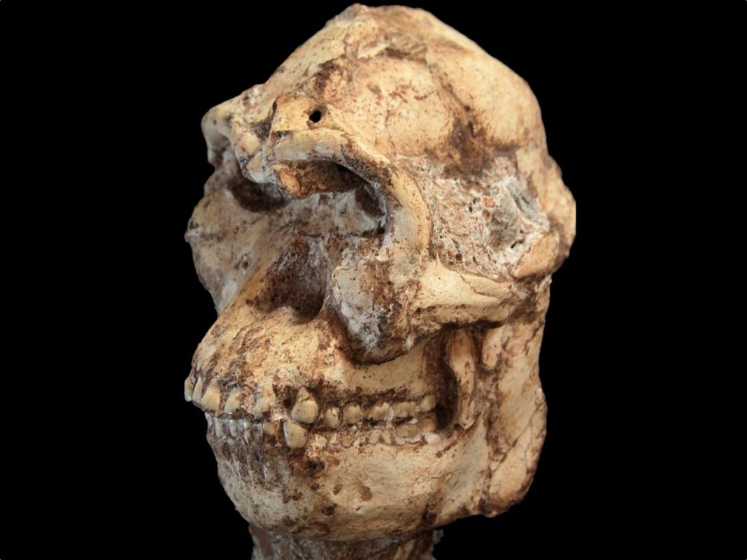 'Wonder' Excavation of 'Little Foot' Skeleton Exposes Mystical Human Relative