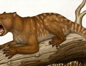 Researchers rebuild skeleton of frightening ancient 'marsupial lion'