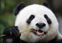 10 jungle animals that might go extinct due to the fact that of environment modification