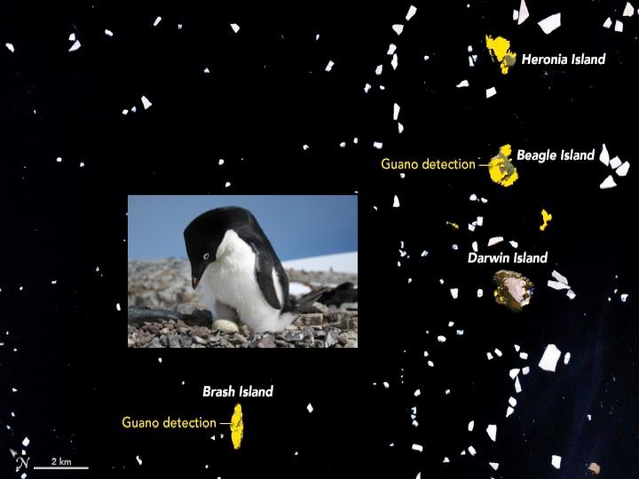 Why Are NASA Researchers Tracking Penguin Poop From Area?
