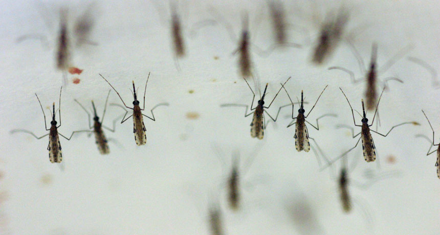 People erased mosquitoes (in one little laboratory test)