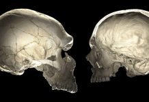 Why Do We Have Such Oddly Shaped Skulls?