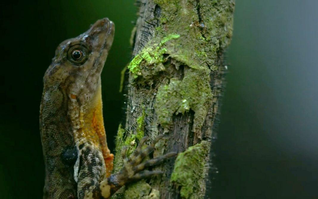 ENJOY: First-Ever Video Footage of a Lizard Breathing Underwater
