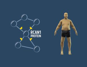 Targeting this gene might make the body disregard fat in foods video