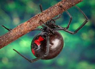 Guy Gets Black Widow Spider Bite. Then He Can't Pee.