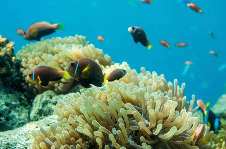 Shark Populations Decrease In Queensland: What Does It Mean For The Reefs?